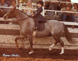 Thistle Pony & Lark