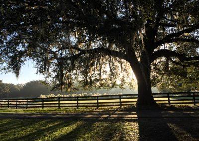 big-tree-fence-backlit