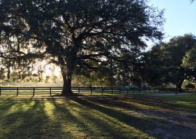 big-tree-fence-backlit2