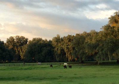 pasture-five-horses-grazing