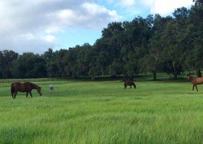 pasture-grazing