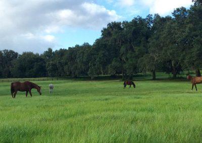 pasture-long-grass-four-horses