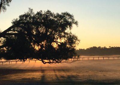 pasture-redmist-treebranch