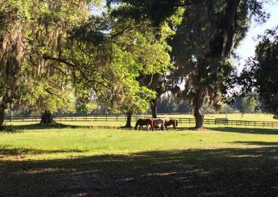 pasture-threehorses-trees