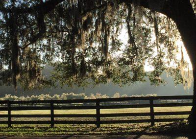 pasture-tree-pampas-grass