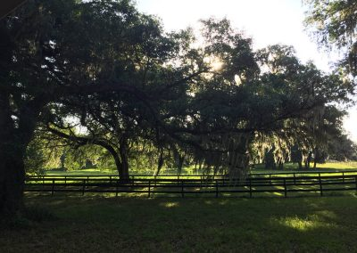 trees-fence-pasture-shady